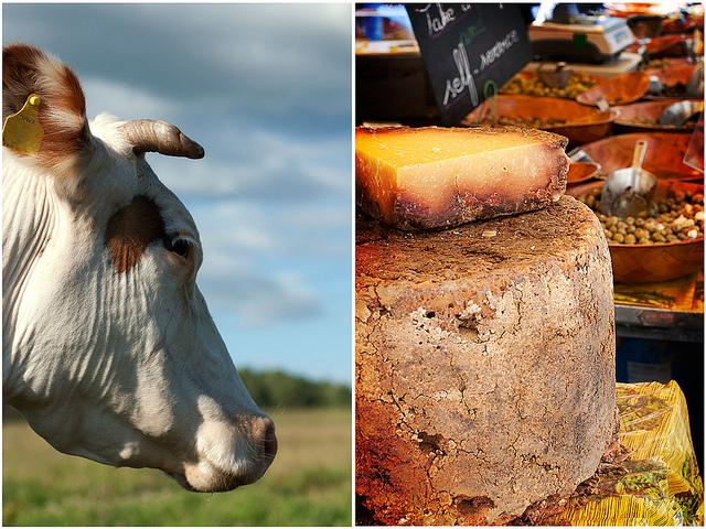 Литовский сыр