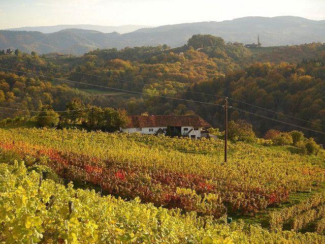 Австрийские виноградники